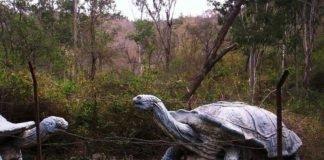 Suketi Fossil Park Nahan